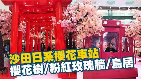 沙田新城市變身櫻花車站 粉紅玫瑰牆/5大影相位