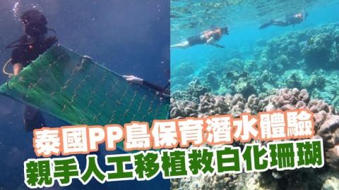 泰國PP島保育潛水體驗 親手人工移植救白化珊瑚