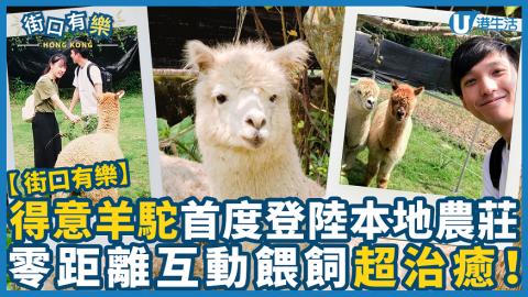 【街口有樂】得意羊駝首度登陸本地農莊!零距離互動、餵飼超治癒!