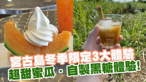 宮古島冬季限定3大體驗 超甜蜜瓜.自製黑糖體驗.甘蔗迷宮!