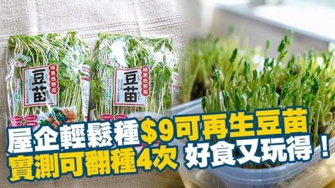 屋企輕鬆種$9可再生豆苗 實測可翻種4次 好食又玩得!