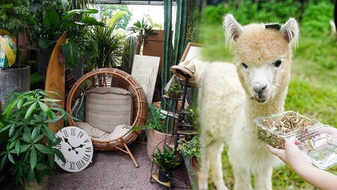 【大埔好去處】大埔假日郊遊好去處 親親萌爆羊駝/2萬呎綠色植物園