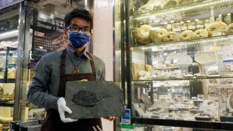 【周末e檔案】港鐵站牆身藏化石原來好普遍?