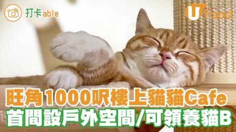 【貓Cafe 香港|週末好去處 2021】旺角新開1000呎全港首間戶外露台貓貓Cafe 跟貓BB 打卡玩遊戲/歡迎領養貓貓~