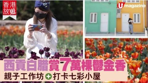 【香港放遊】西貢白腊賞7萬棵鬱金香 親子工作坊、打卡七彩小屋