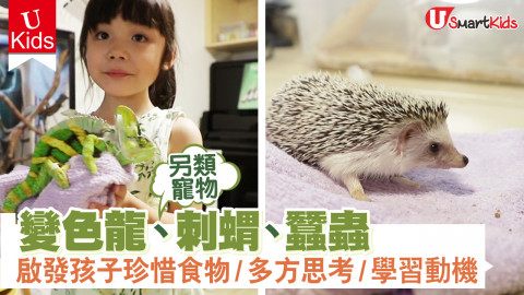 【Ukids】另類寵物!變色龍、刺蝟、蠶蟲  啟發孩子珍惜食物/多方思考/學習動機