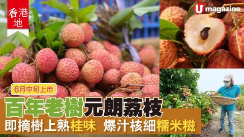 【香港地】長者栽種 港產樹上熟荔枝
